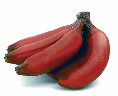Punainen Banaani